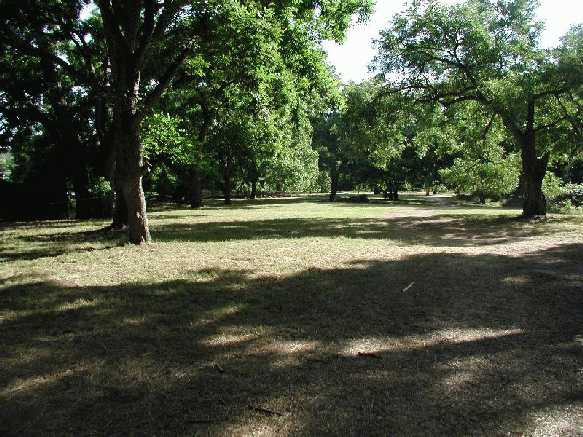 The lovely shaded lands;P6020004.JPG